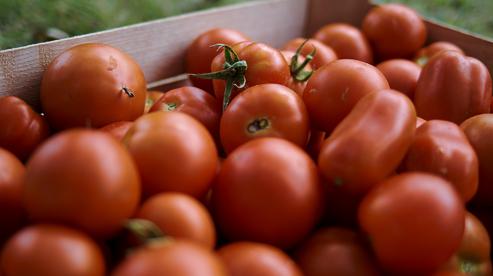 Нитрат-тестеры. Проверка помидоров на нитраты